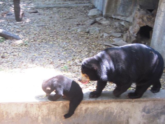 Зоопарк в Чианг Мае медведи