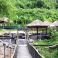 Водопады Янг Бей: фото
