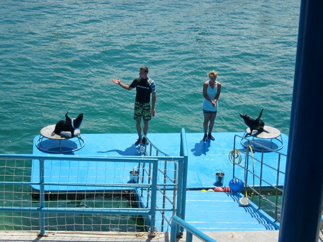 Шоу морских котиков в Винперле