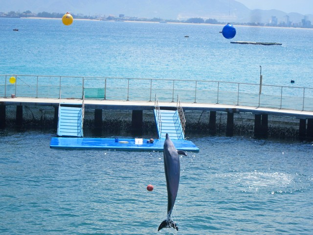 Шоу дельфинов в Винперле