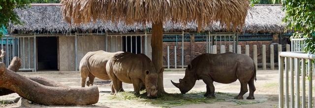 Зоопарк вХошимине: кусочек оазиса вшумном мегаполисе