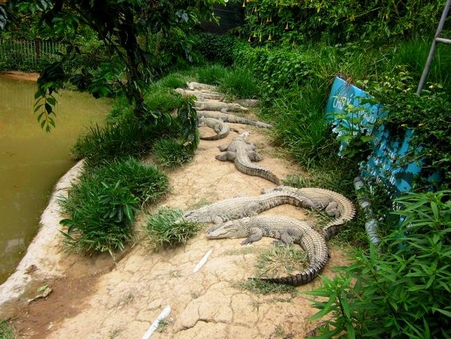 Парк Пренн в Далате (Вьетнам)