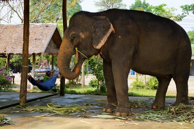 Катание на слонах в Паттайе