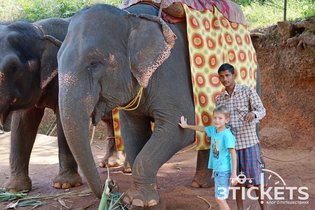 Водопад Дудхсагар и катание на слонах: куда поехать в Гоа