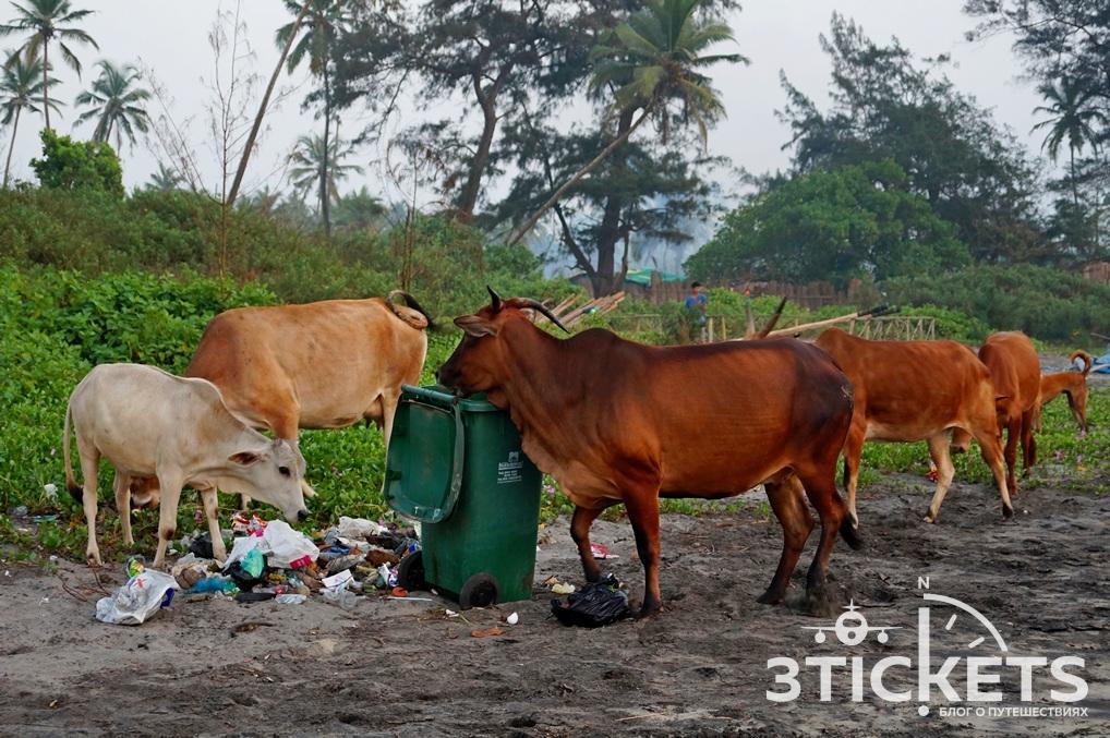Почему в Индии грязно