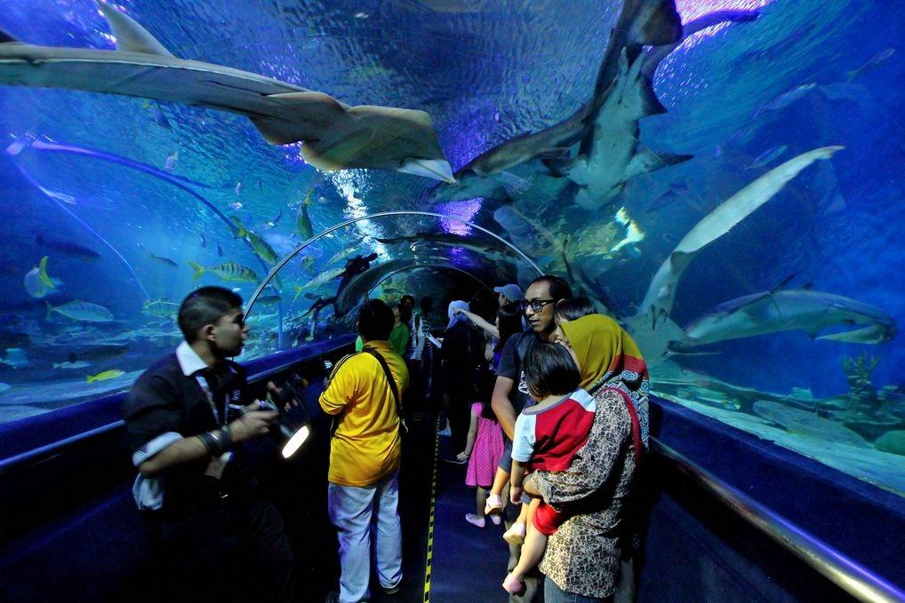 Куала-Лумпур с детьми: океанариум