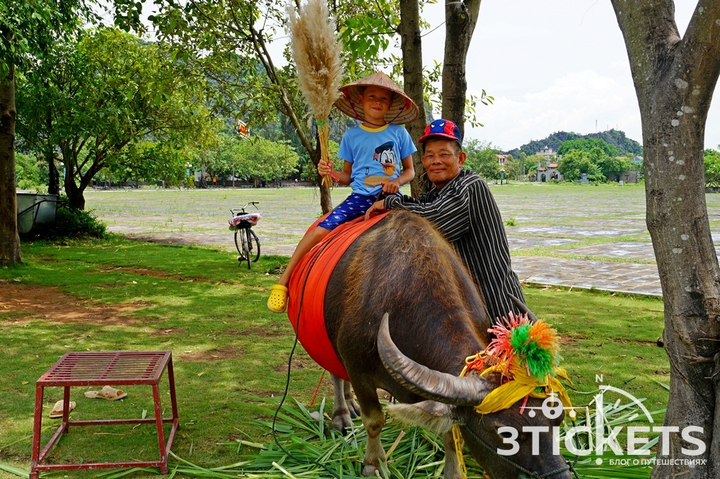 Вьетнамский буйвол