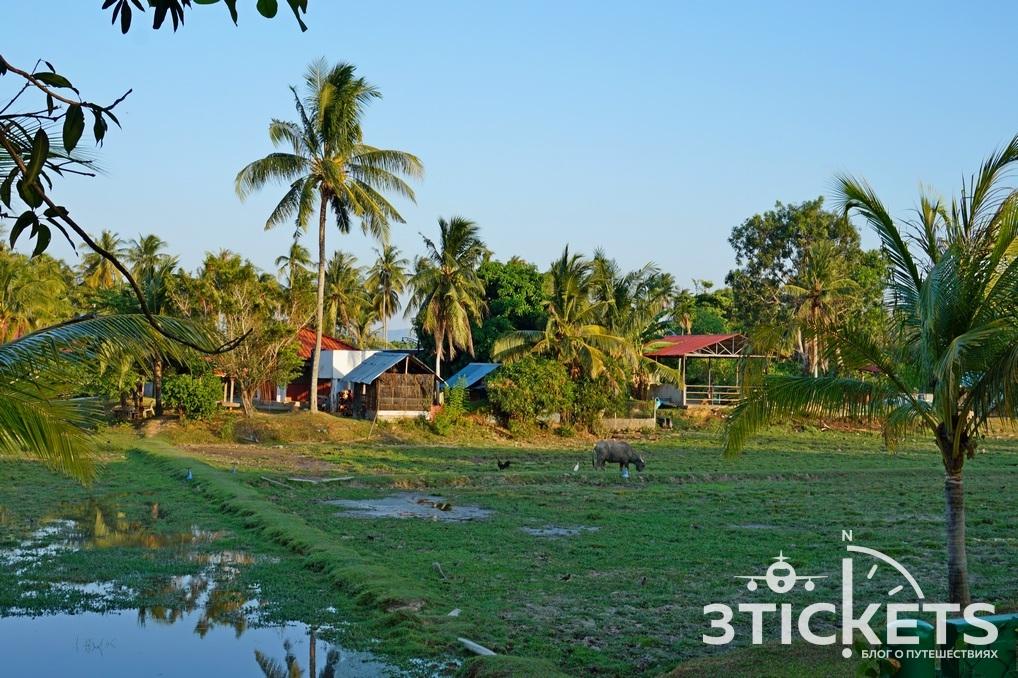 Рисовые поля имузей риса на Лангкави, Малайзия