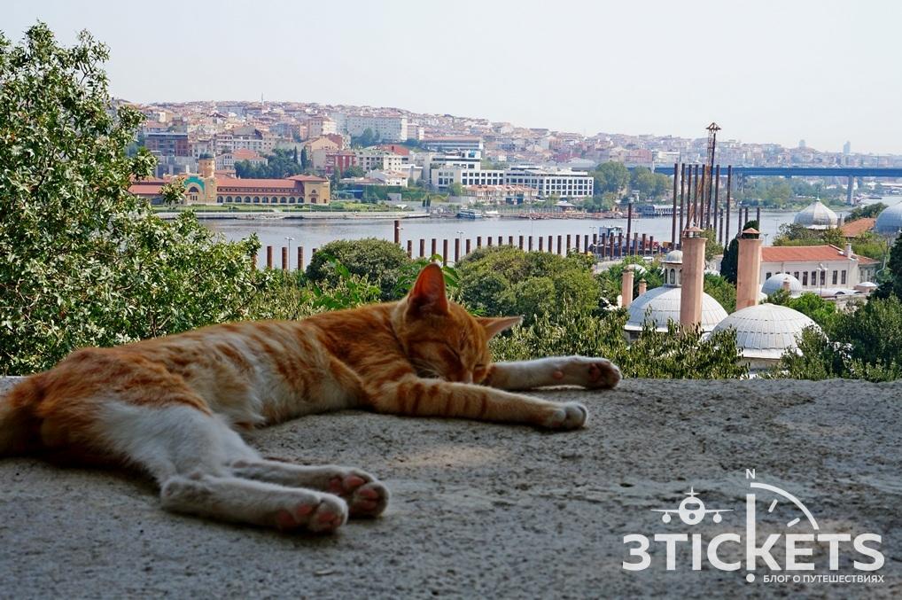 Кошки в Стамбуле
