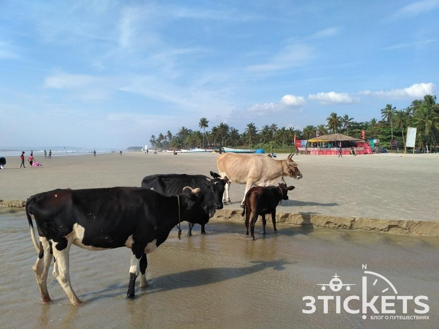 Пляж Колва, Южное Гоа