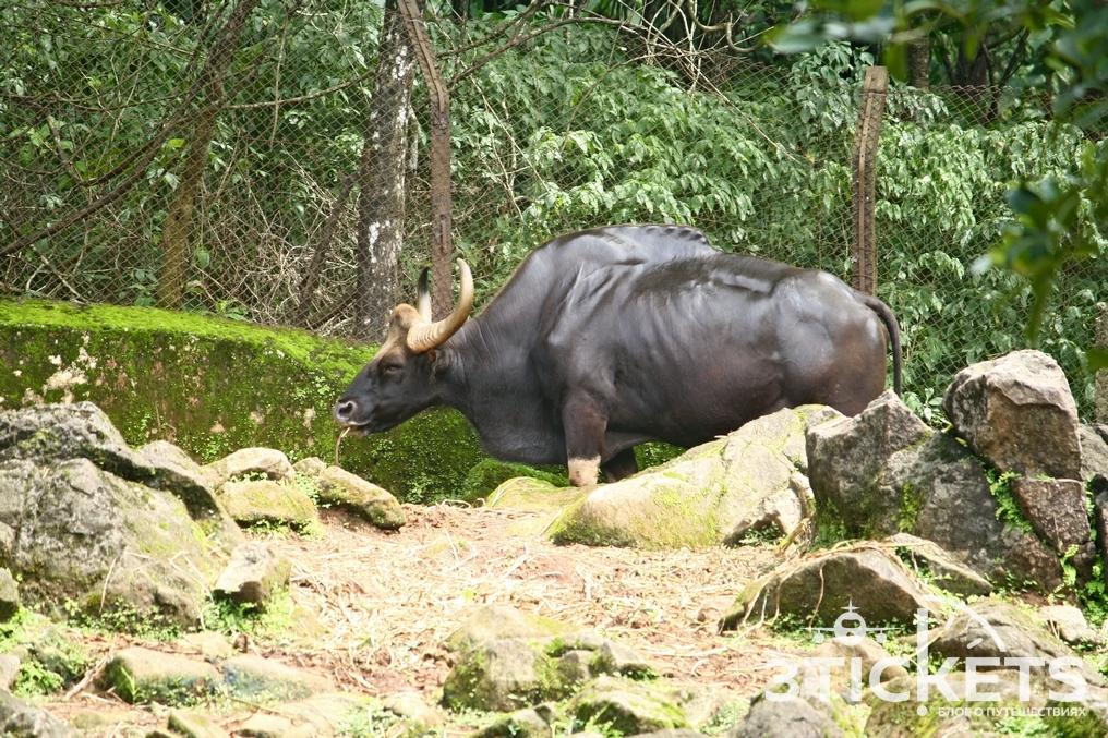 Зоопарк (заповедник) Бондла, Гоа