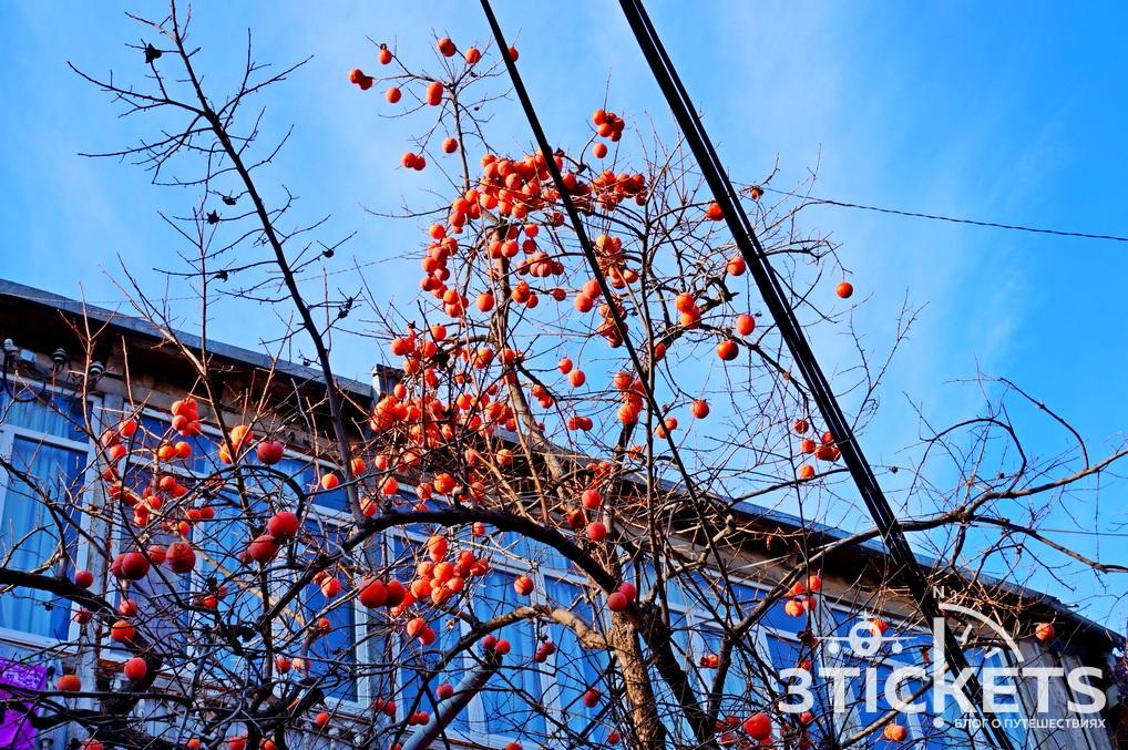 Погода в Тбилиси по месяцам: когда лучше ехать на отдых?