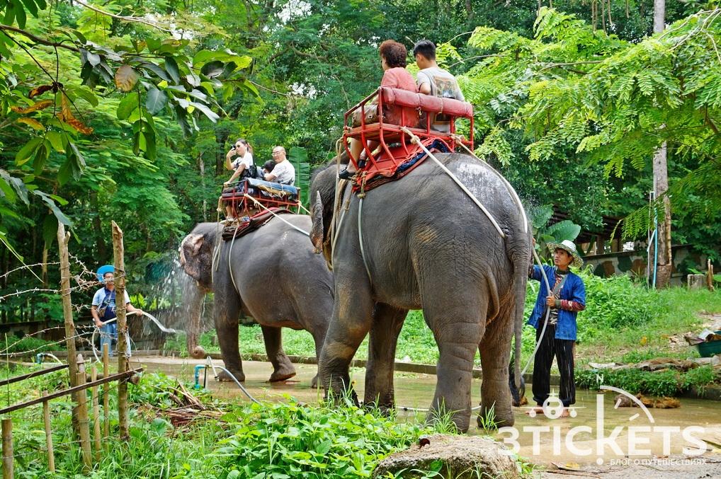 Экскурсии на Самуи: катание на слонах