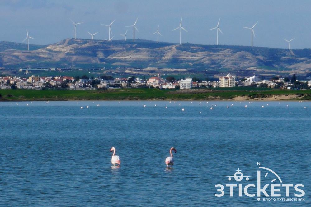 Соленое озеро ирозовые фламинго в Ларнаке, Кипр