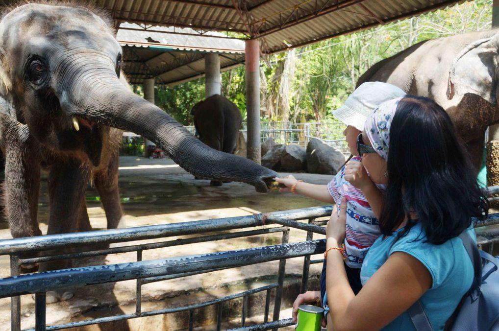 Кормление слонов