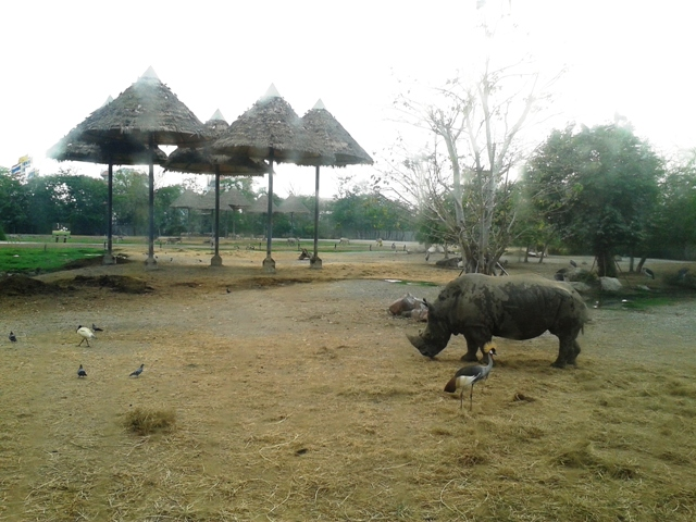Зоопарк Safari-World в Бангкоке
