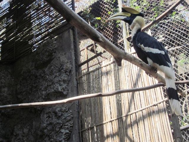 Зоопарк в Чианг Мае птицы
