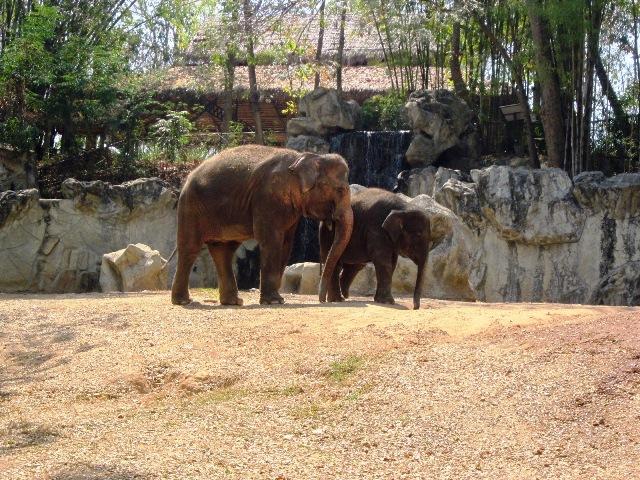Зоопарк в Чианг Мае слоны