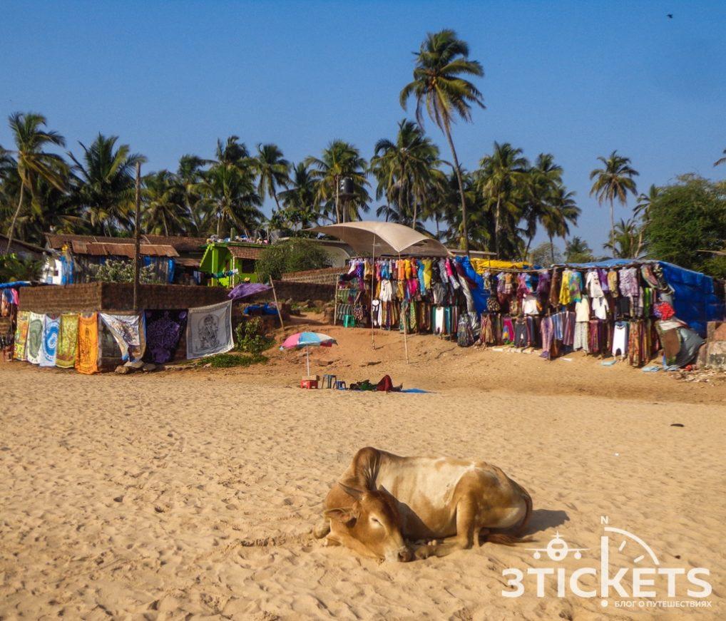 Пляжи Гоа: Анджуна (фото)