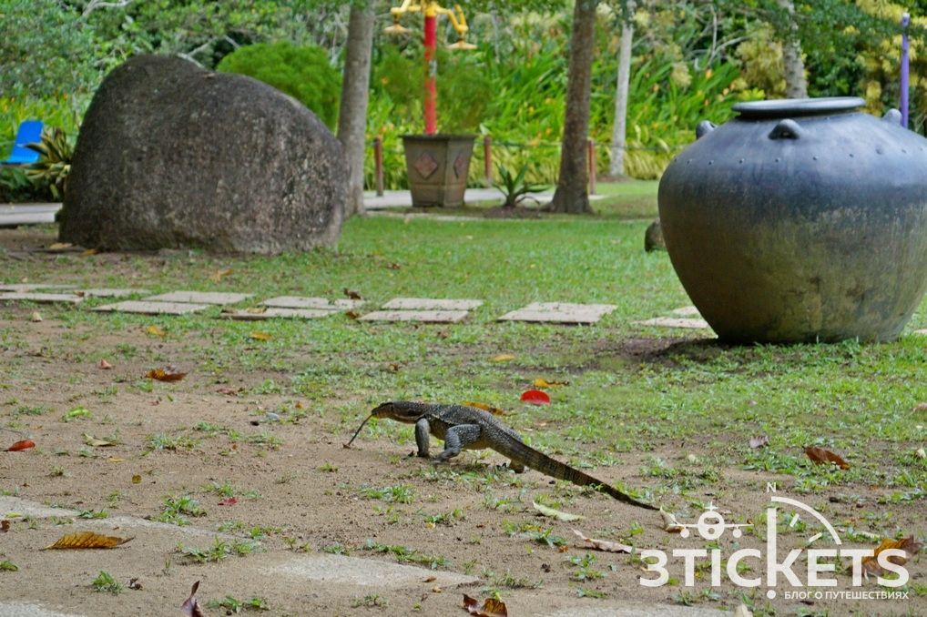 Вараны на Пенанге (Малайзия) в парке