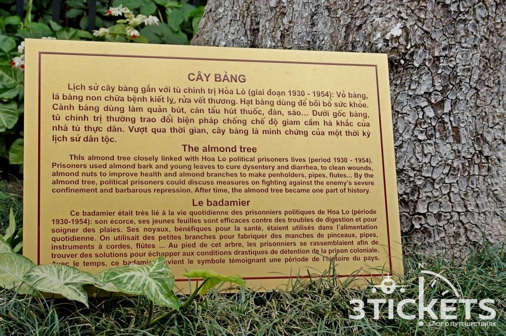 Тюрьма Хоа Ло в Ханое: миндальное дерево
