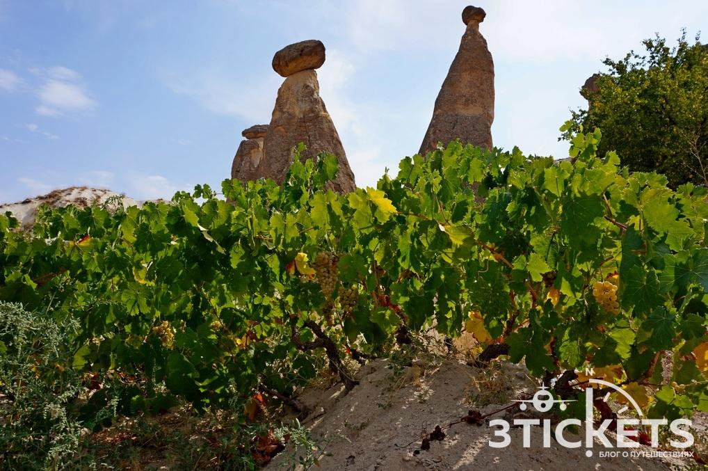 Виноградники в Каппадокии