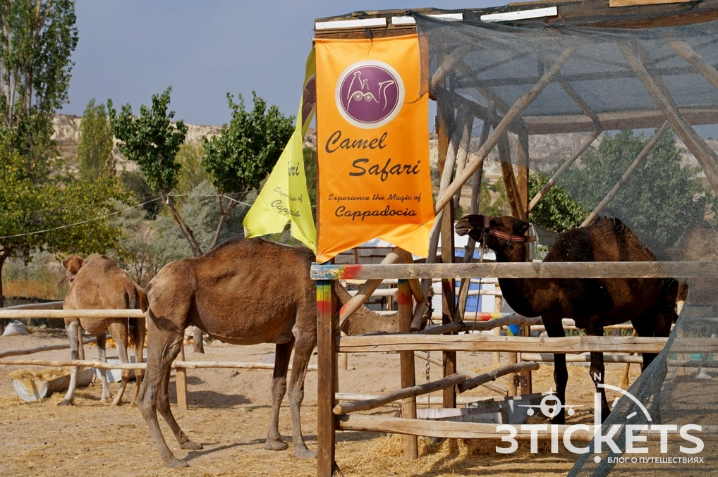 Катание на верблюдах в Каппадокии