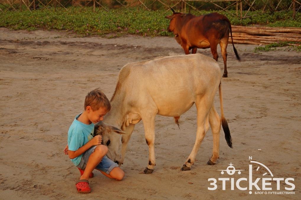 Отдых в Гоа с детьми