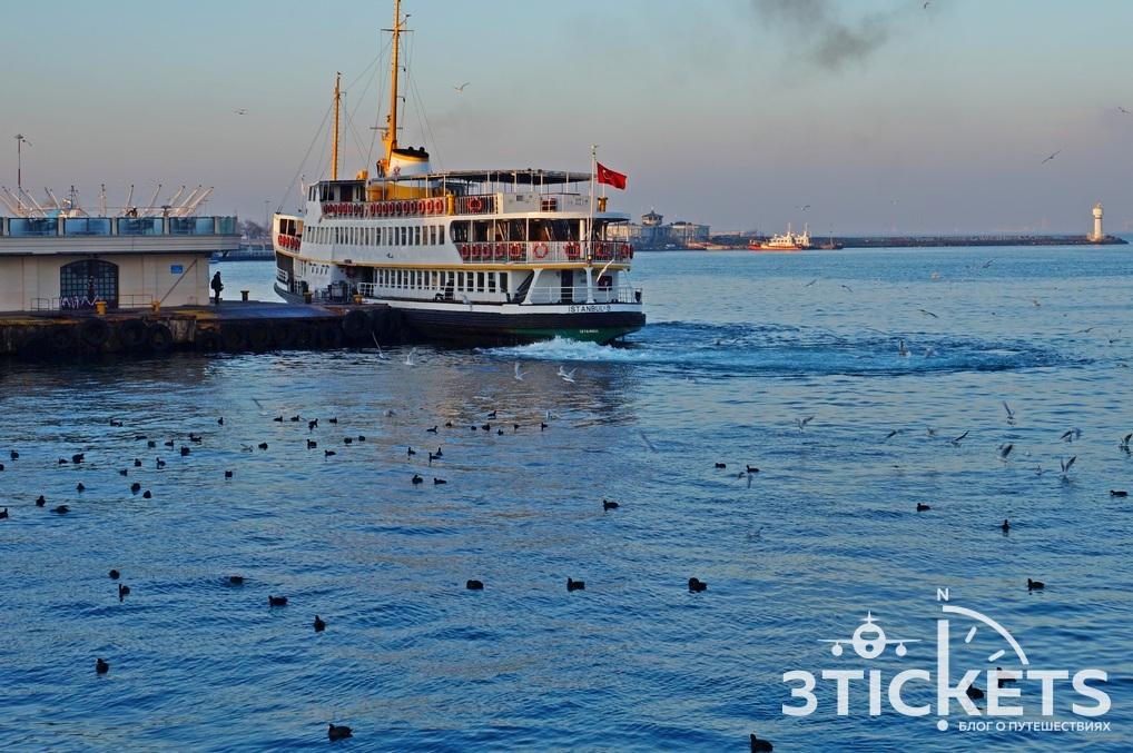 Стамбул зимой в январе: черные утки