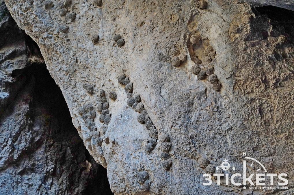 Птичья пещера (Арени-1) в Армении