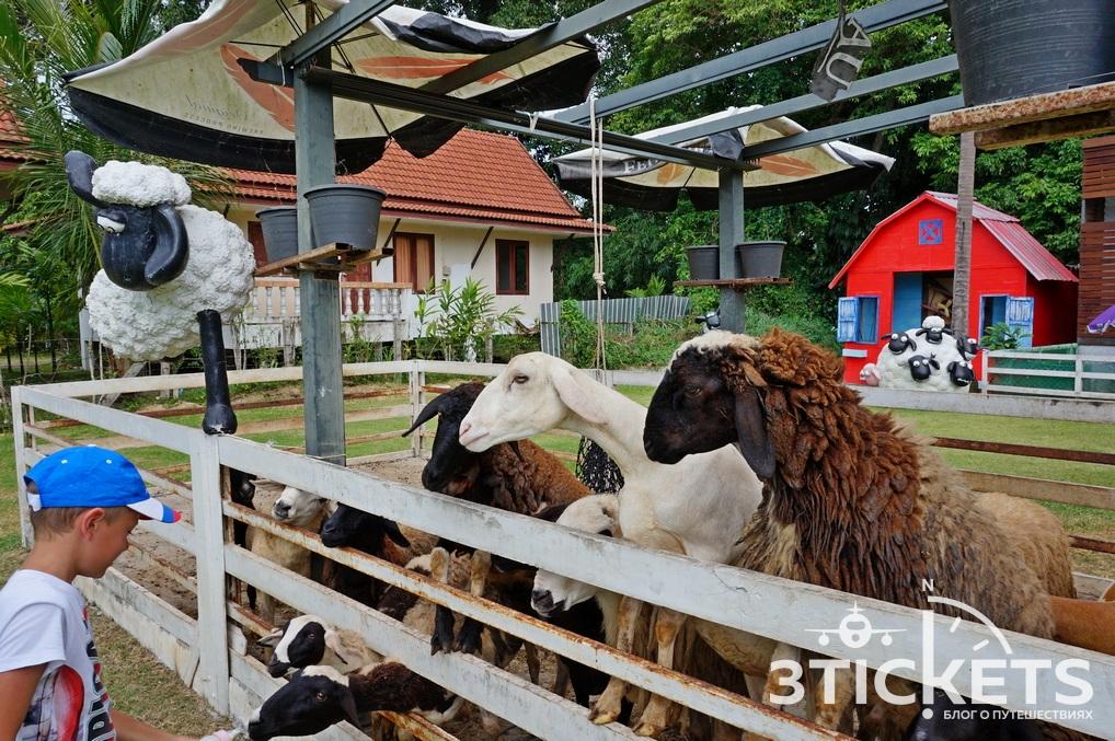 Овечья ферма на Самуи (Sheep Farm Samui)