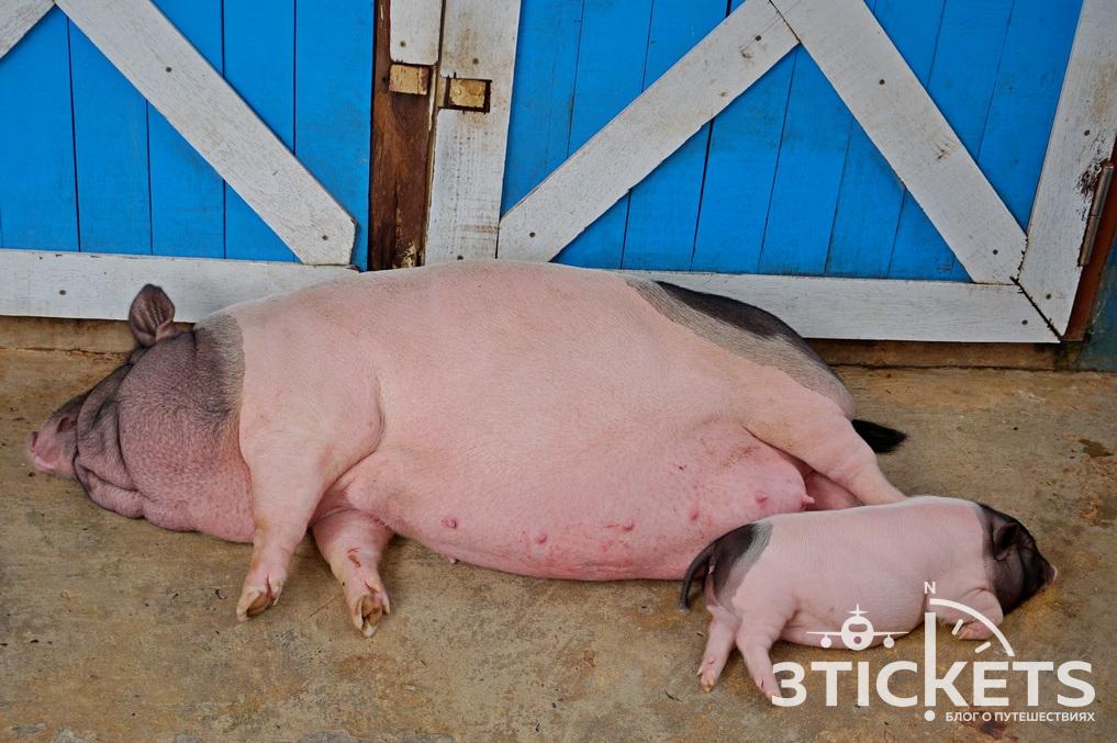 Парк «Дрим Ворлд» в Бангкоке: ферма с животными