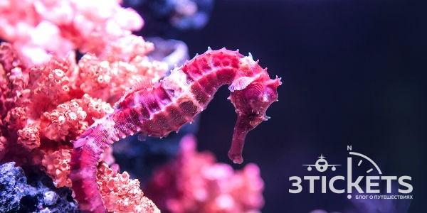 SEA LIFE Malaysia - океанариум в Леголенде, Малайзия